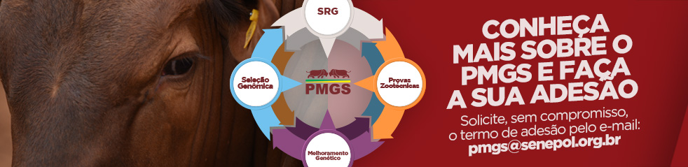 Banner PMGS