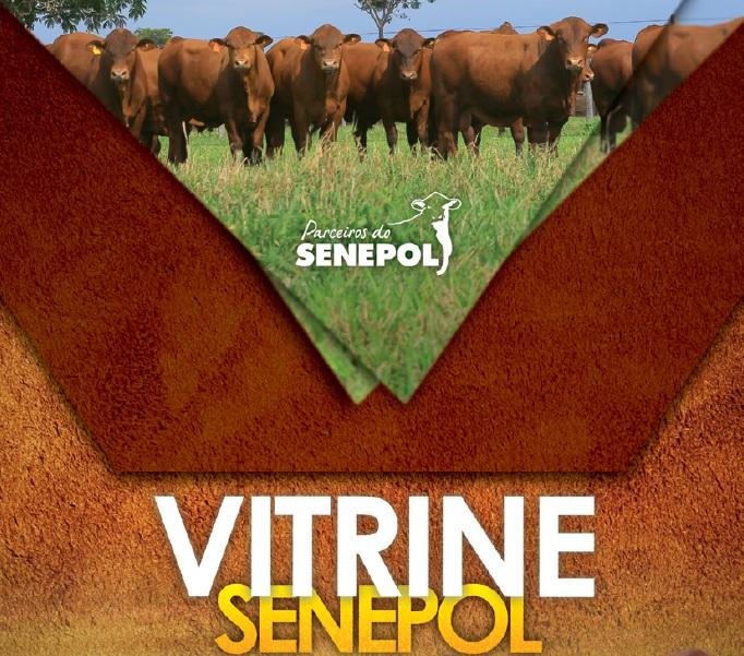 Vitrine Senepol para site