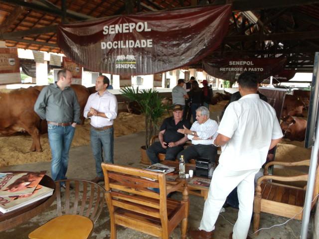 Criadores e visitantes no stand da ABCB-Senepol